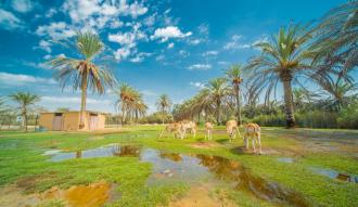 افريكانو بارك : حياة برية مليئة بالاثارة والتشويق وسط الحيوانات