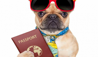 بالخطوات اجراءات استخراج جواز سفر للحيوانات الاليفه واسعار تذاكر الطيران له
