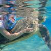 السباحة مع السلاحف البحرية والدوجونج تجربة مش هتعيشها غير في مرسي مبارك بمرسي علم