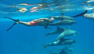 نفسك تعوم مع الدلافين ؟ تعرف علي اسعار رحلة سطايح مرسي علم وافضل مواعيد الزيارة