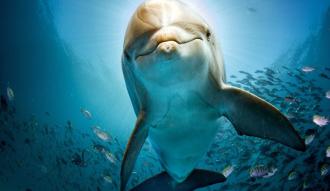 غُص مع الدلافين واستمتع بالحياه البحرية الساحرة في دولفين هاوس الغردقة، اليك كل التفاصيل