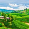 سريلانكا.. كل ما تحتاج معرفته عنها بالاسعار لقضاء أجازة ممتعه مع افضل برنامج سياحي بها