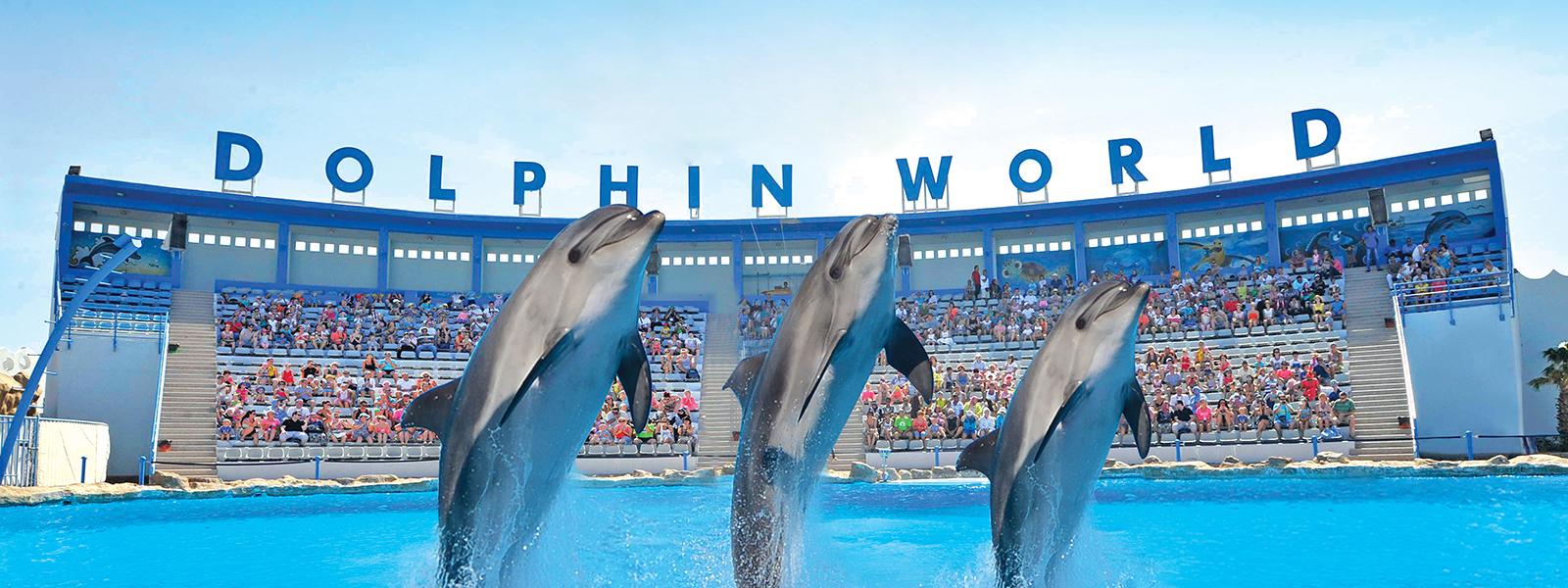 dolphin show hurghada