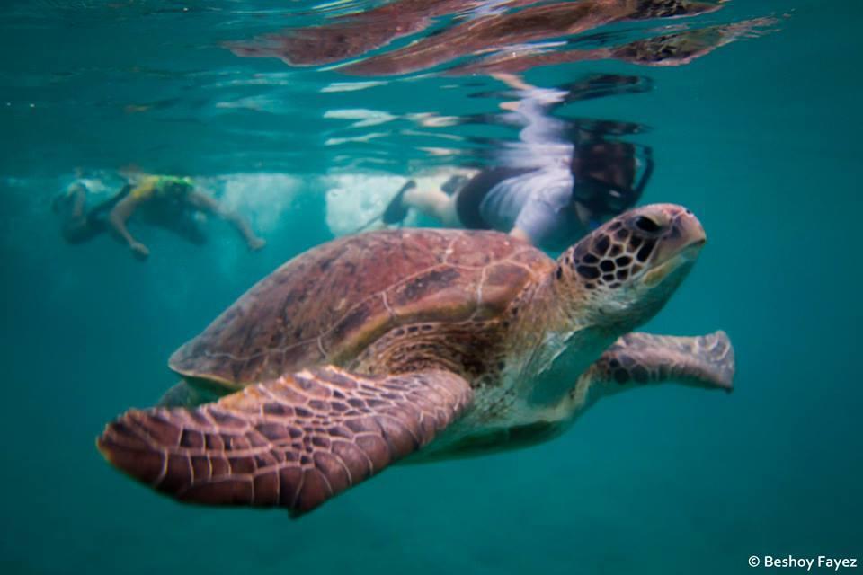 السلاحف البحرية