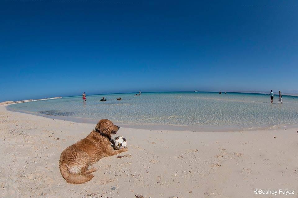 شاطئ حنكوراب محمية وادى الجمال