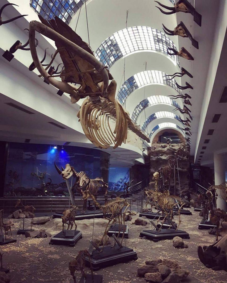 متحف العلم الحيوانى