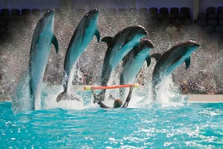 عرض الدلافين - اسطنبول