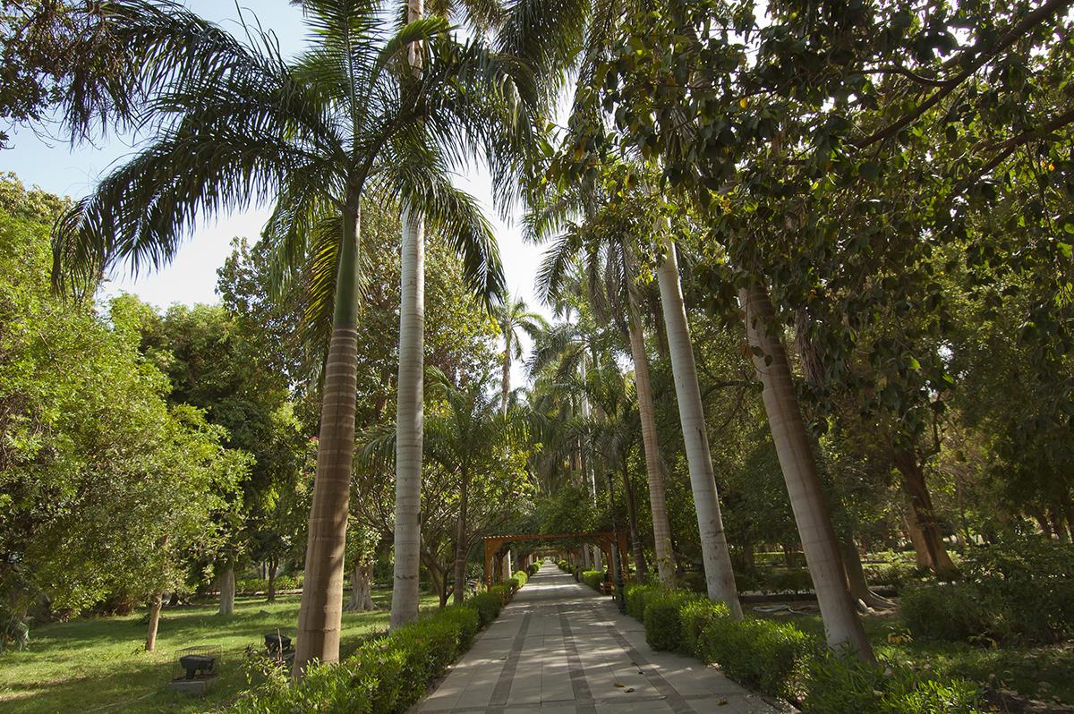 حديقة النباتات بأسوان